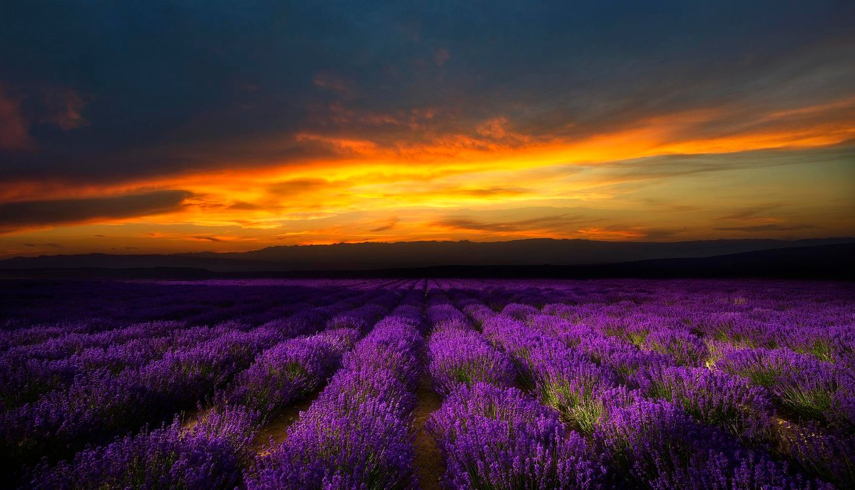 Фото бесплатно закат, поле, цветы, лаванда, пейзаж, пейзажи