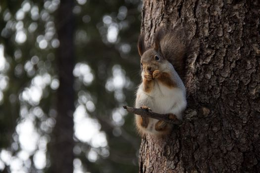 Photo free animals, squirrels, branches