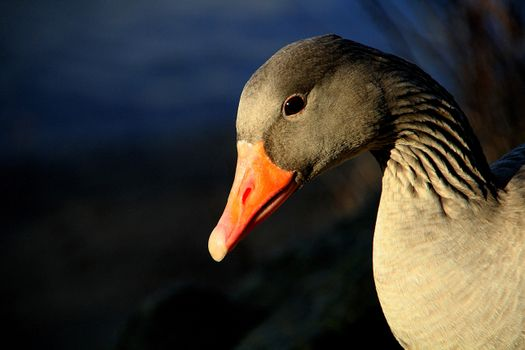 Photo free bird, wing, animal