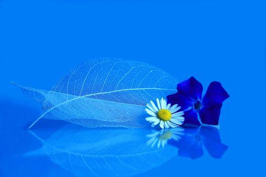 Фото бесплатно лист, цветок, ромашка