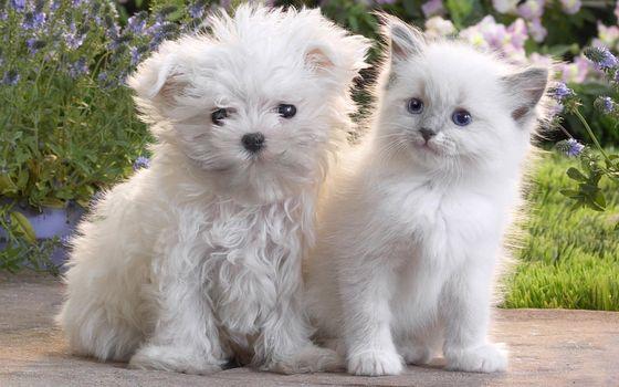 Фото бесплатно щенок, котенок, пара