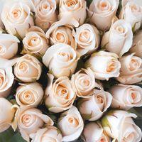 Бесплатные фото букет, розы, бутоны