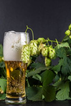 Фото бесплатно еда, пиво, пена