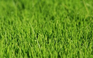 Фото бесплатно трава, поверхность, свет