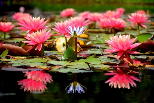 Photo free flowers, body of water, water lily