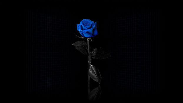 Photo free blue flowers, blue rose, flowers