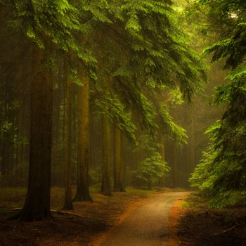 Заставки тропинка, солнечный свет, пейзаж
