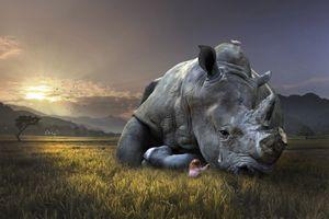Бесплатные фото поле,девочка,носорог,закат солнца,слеза,art,фантазия