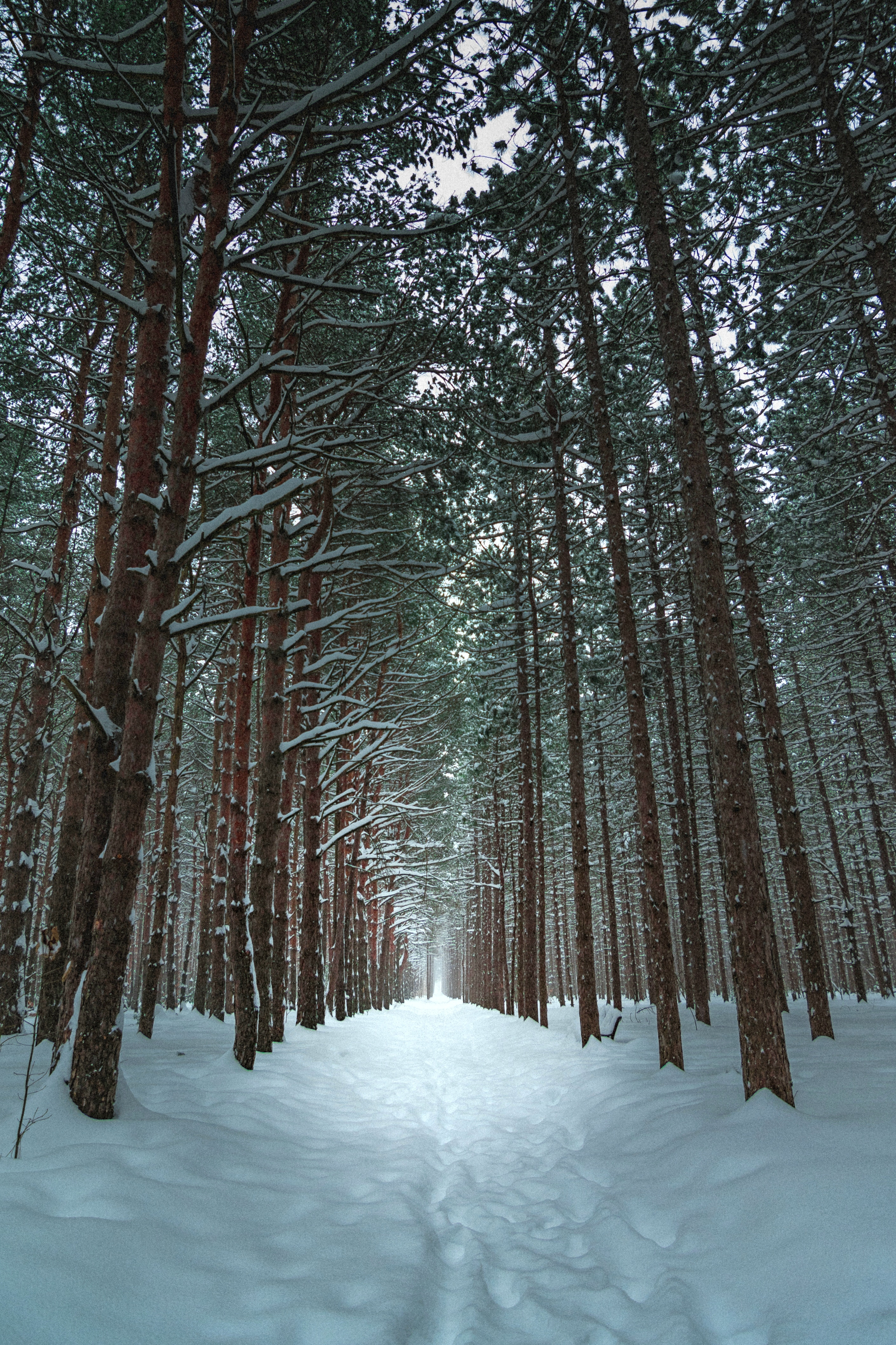 фото зимы леса на телефон опубликовала фото