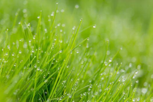 Утренняя роса на траве · бесплатное фото