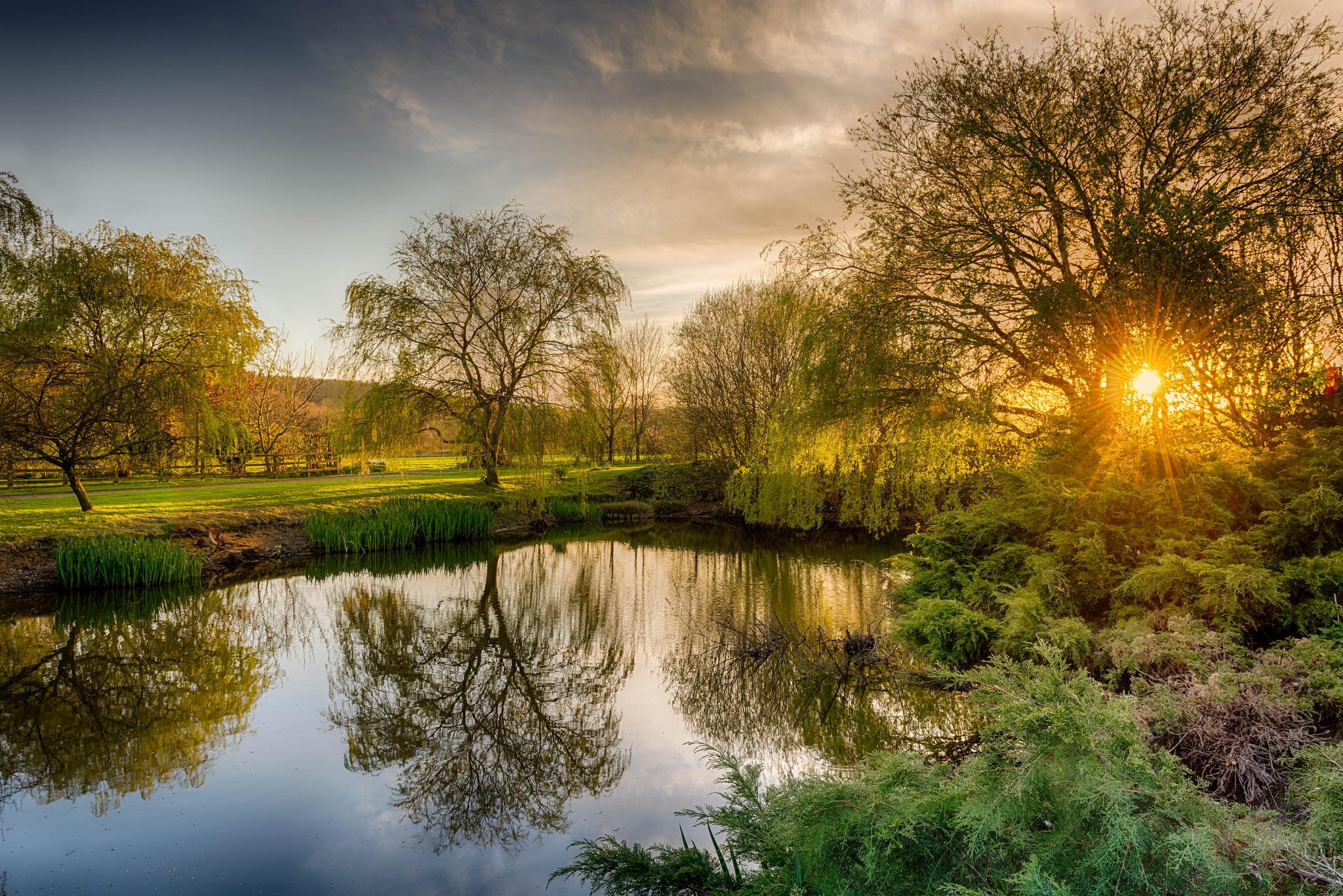 Обои закат, озеро, деревья, поле