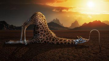 Бесплатные фото животные,юмор,цифровое искусство,жирафы,напитки,горы,солнечный свет