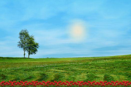 Фото бесплатно небо, дерево, фотомонтаж