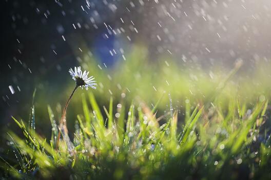 Фото бесплатно дождь, роса, капли дождя