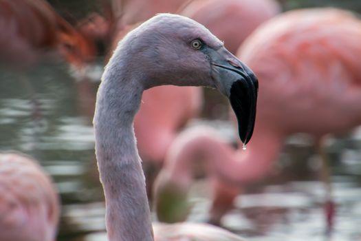 Photo free flamingos, profile view, beak