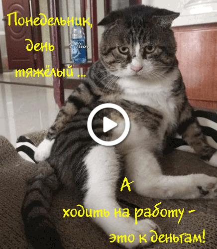 Postcard free monday, domestic cat, postcard