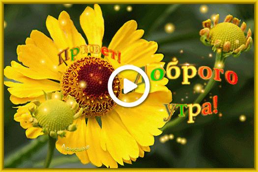 Postcard free helenius sunflower, tex, postcard