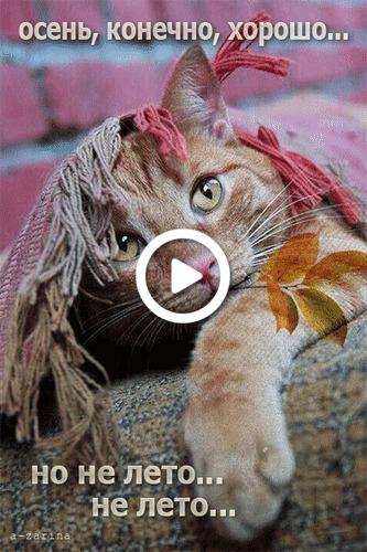 Postcard free cat, autumn, animation