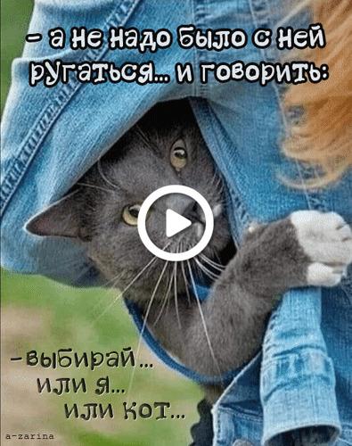 Postcard free cat, humor, animation