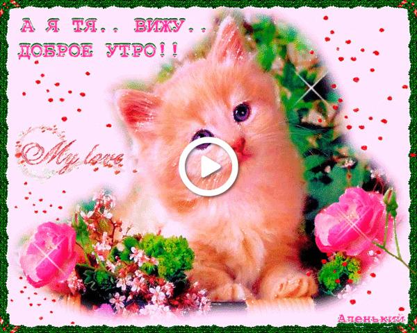 Postcard free good morning pussy, good morning daughter animated, good morning kitten gifs