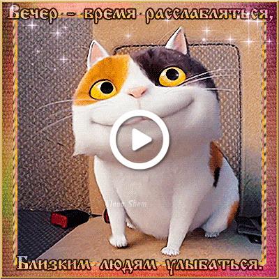 Postcard free kitten, evening, smile