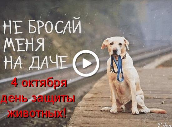 Postcard free animal protection day, animals, postcard