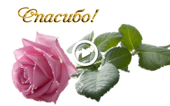 Postcard free thank you pictures beautiful animation, postcard, rose