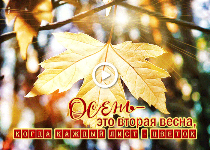 Postcard free original postcard with autumn, maple leaf, animation