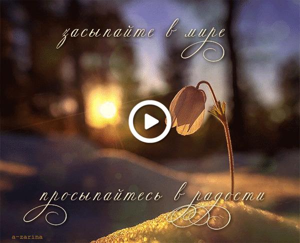 Postcard free good night, flower, animation