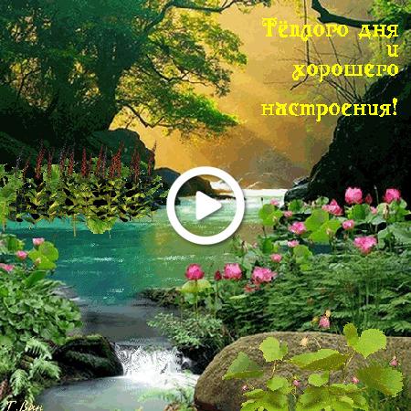 Postcard free summer, river, birds