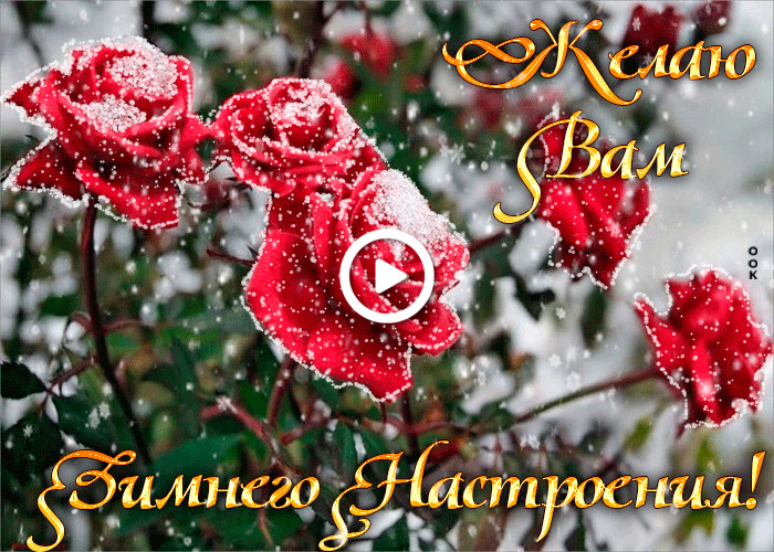Postcard free I wish you a winter mood, flowers, roses