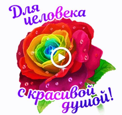 Postcard free gift, rose, flower