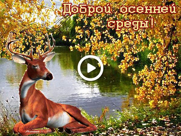 Postcard free deer, animals, postcard