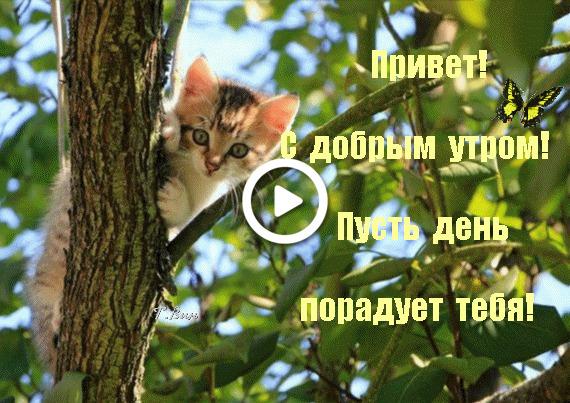 Postcard free morning wish, kitten, butterfly