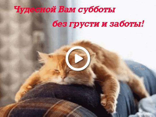 Postcard free saturday wish, postcard, domestic cat