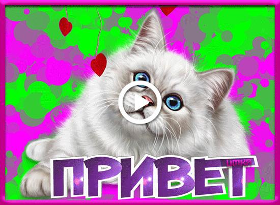 Postcard free hello, kitten, cats