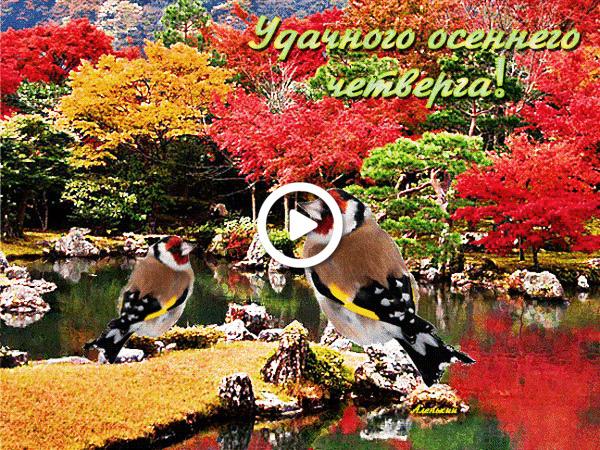 Postcard free birds, nature, autumn