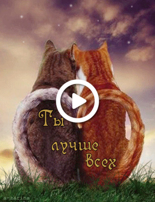 Postcard free cats, sky, animation