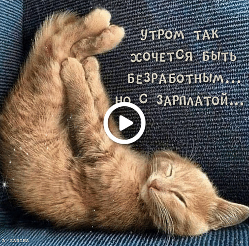 Postcard free cat, from the heart for friends good morning winter pictures, humor