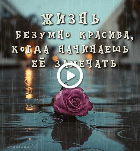 Postcard free rose, rain, animation