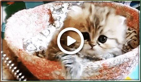 Postcard free good morning picture, good morning funny pictures, kitten