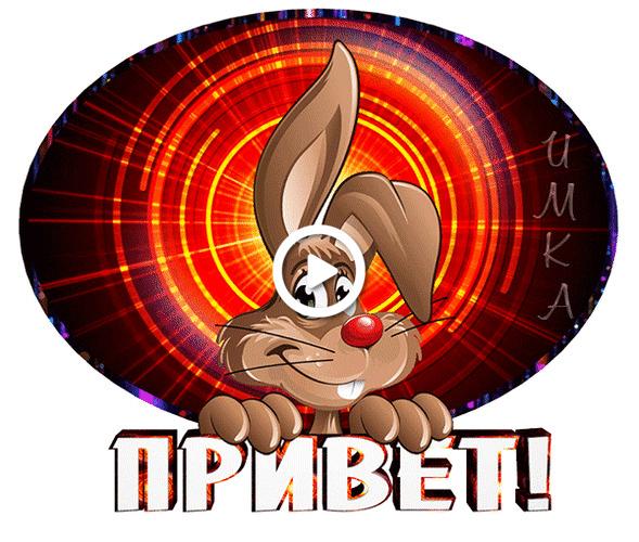 Postcard free hello, hare, hello animation moving