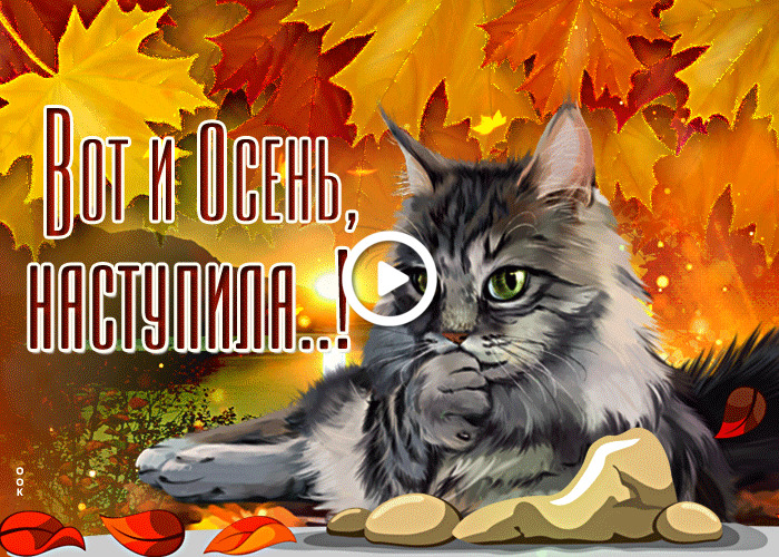 Postcard free so autumn has come, maple leaves, cat