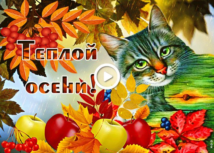Postcard free my sweet autumn, cat, apples