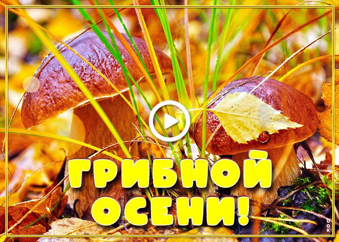Postcard free mushrooms, postcard, grass