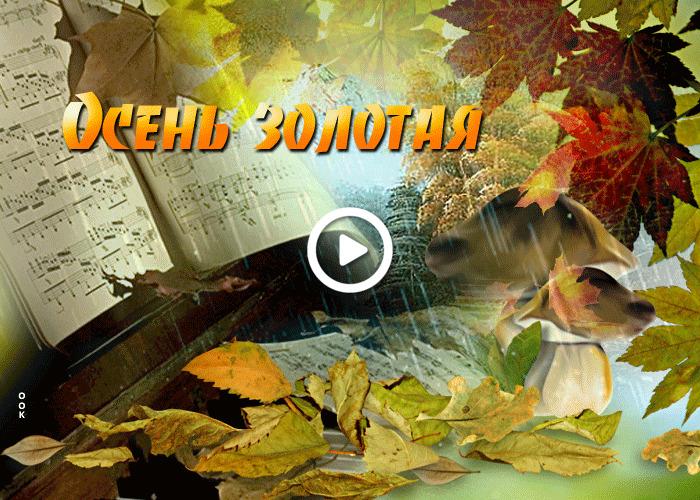 Postcard free beautiful with fall, leaf fall, leaves