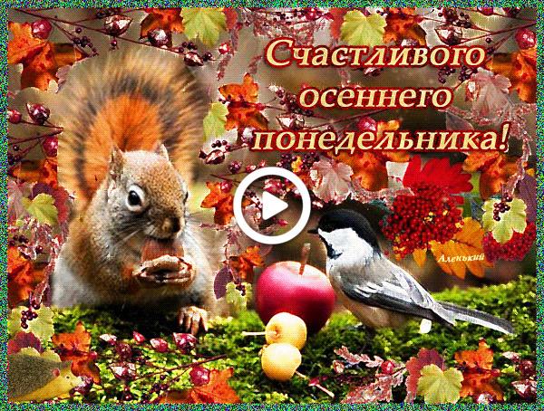 Postcard free animals, autumn monday pictures, birdie