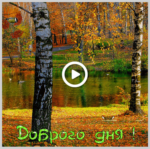 Postcard free autumn wish, nature, birches