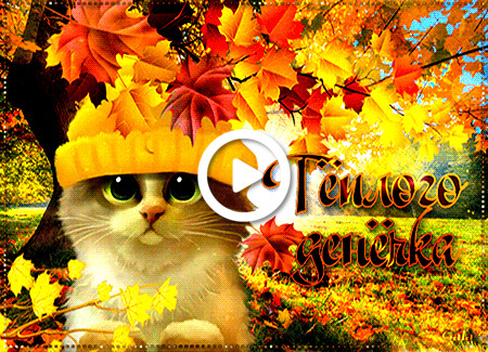 Postcard free day, autumn, kitten