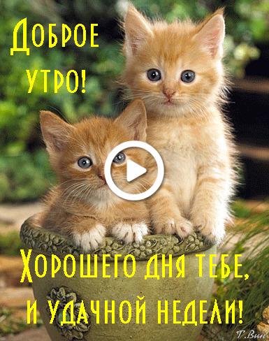 Postcard free monday morning wish, postcard, kittens